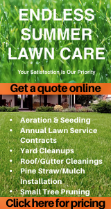 Endless Summer Lawn Care